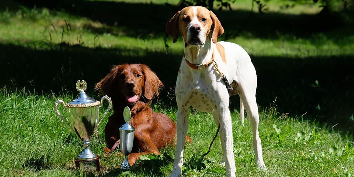 Tiki og Henry har i dag begge bestået apporteringsprøven på Fyn